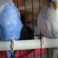 blueawoelkchen