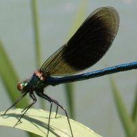 Insekten043