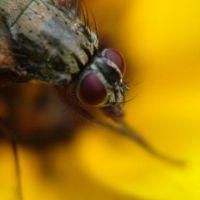 Insekten172