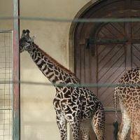 zoo-basel069