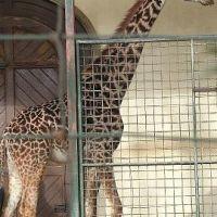 zoo-basel070