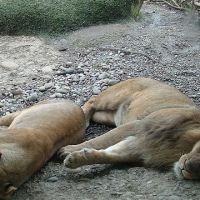 zoo-basel111