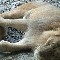 zoo-basel118