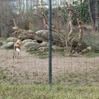zoo-basel119