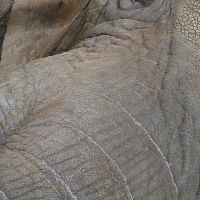 zoo-basel176