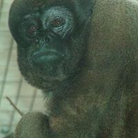 zoo-basel197