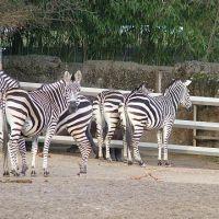 zoo-basel211